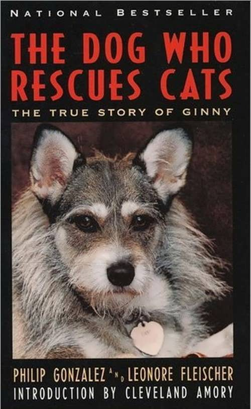 Ginny – the dog who rescued cats - Wander Lord
