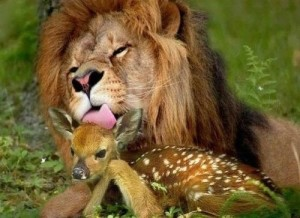 Lion and Deer