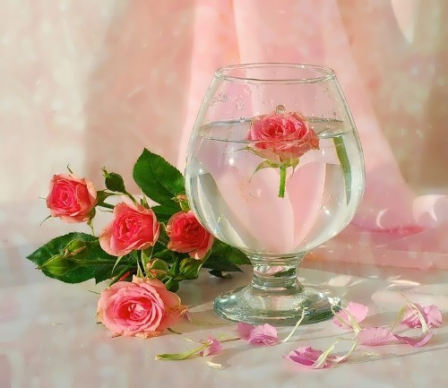 The rose - myth and meanings