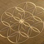 Wonderful Crop Circles