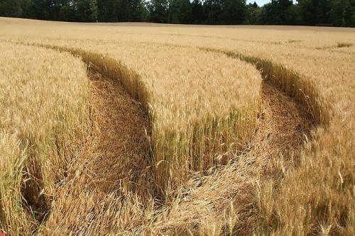 Making Sense of My Crop Circle Experience
