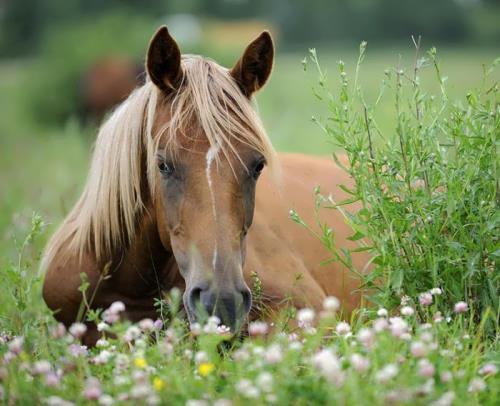 Wonderful animal