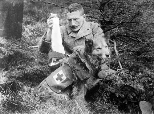 Dog – ambulance is transferring bandages and medicines