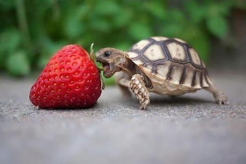 Food battle