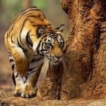 Cute big cat