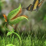 Green predators – carnivorous plants