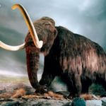 Mastodon and mammoth