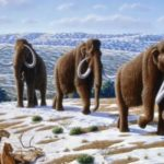Woolly mammoth, Mammuthus primigenius. Mauricio Anton