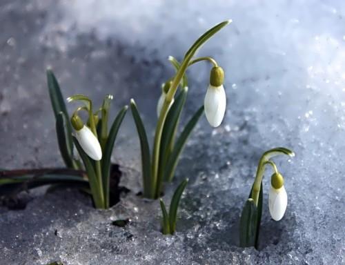 Spring is wonderful