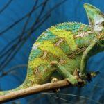 Wonderful lizard