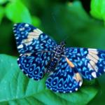 Wonderful creature