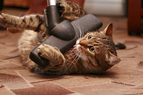 Let's hoover the cat