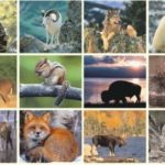 Misconceptions about mammals