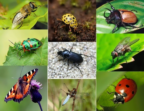 Misconceptions about insects