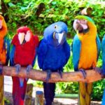Misconceptions about birds