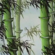 Attractive bamboo