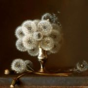 Dandelion in pictures