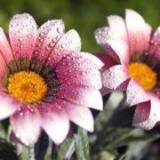 Dew symbolizes the spiritual rebirth