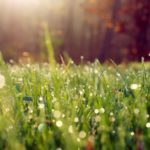 Wonderful morning dew
