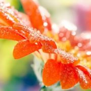 Wonderful dew