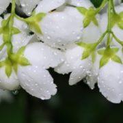 Dew on beautiful flowers