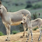 Beautiful donkeys