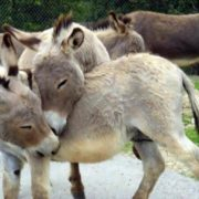 Loving donkeys