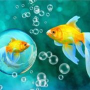 Goldfish in the bubble