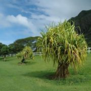 Wonderful Hawaii