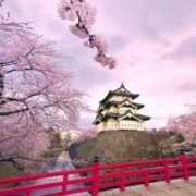 Cherry blossoms not far from Hirosaki Castle