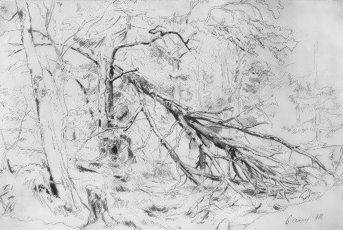 Ivan Shishkin. Broken birch, 1872