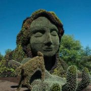 Sculpture made of cacti