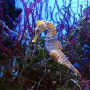 Colorful sea horse
