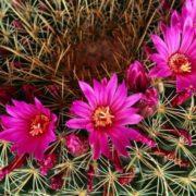 Magnificent cactus