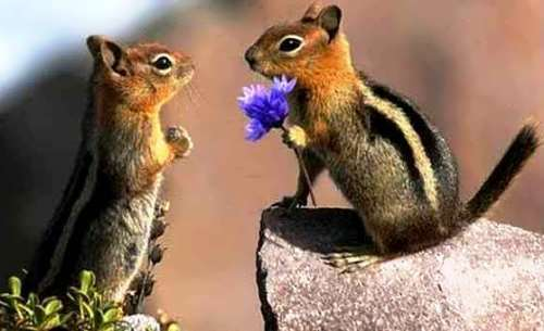 Wonderful chipmunks