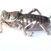 Wonderful cricket