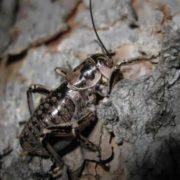 Cute cricket