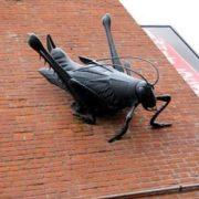 giant cricket