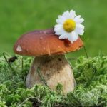 Mushroom – neither a plant nor an animal