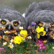 Charming owl