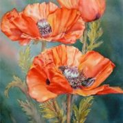 Attractive poppies