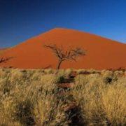 Gorgeous Botswana