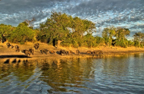 Botswana - Jewel of the Kalahari