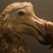 Cute dodo
