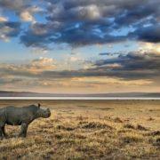 Cute little rhino