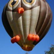 Cute owl balloon