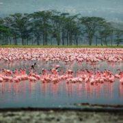 Gorgeous Kenya