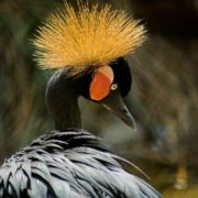 Gorgeous crane