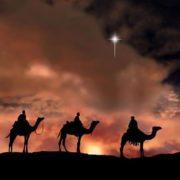 Graceful camels