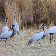 Interesting cranes